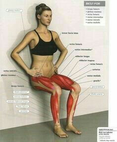 Illustration on which leg muscles are affected during a wall sit exercise